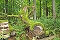Bialowieza National Park in Poland0030.JPG