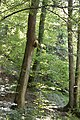 Bienen-Nest an einem Baumstamm 5.JPG