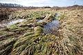 Big Meadows- A Wonderful Wetland (22680719718).jpg