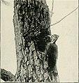 Bird-lore (1921) (14771898343).jpg