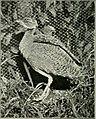 Bird notes (1923) (14754956472).jpg