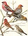 Birds of America; (1923) (20196226278).jpg