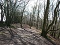 Blackdown Hills , Woodland Trail - geograph.org.uk - 1243073.jpg