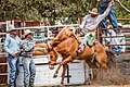 Boddington Rodeo 2015 (128247339).jpeg