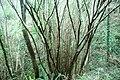 Bolintxu harana 13.jpg