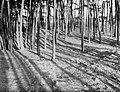 Bos bij Laren, Bestanddeelnr 252-0880.jpg