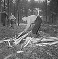Bosbewerking, arbeiders, boomstammen, gereedschappen, Bestanddeelnr 251-9136.jpg