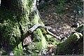 Bosque - Cerro Campanario - panoramio.jpg