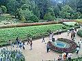 Botanical Gardens, Ooty - panoramio (2).jpg