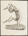 Bradypus didactylus - 1700-1880 - Print - Iconographia Zoologica - Special Collections University of Amsterdam - UBA01 IZ21000145.tif
