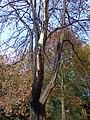 Brandschäden am Baumbestand.jpg