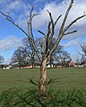 Braunstone Park, Leicester - geograph.org.uk - 727086.jpg