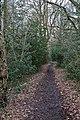 Bridleway, Lord's Wood - geograph.org.uk - 1200214.jpg