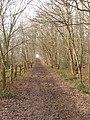Bridleway through coppiced hornbeams, Copse Wood, Ruislip - geograph.org.uk - 111169.jpg