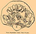 Brockhaus and Efron Encyclopedic Dictionary b76 514-2.jpg