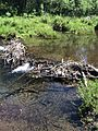 Broken beaver dam on Blackwood Creek June 2014.jpg