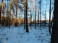 Bryansky District, Bryansk Oblast, Russia - panoramio (37).jpg
