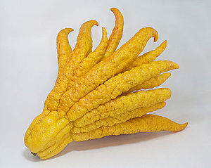 "Buddha's hand - Buddha's hand fruit, ""open hand"" appearance when ripe"