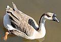 Bump on Goose Head.jpg