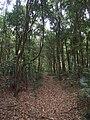 Burgh Track - panoramio (12).jpg