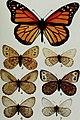 Butterflies and moths of Newfoundland and Labrador - the macrolepidoptera (1980) (20502201392).jpg