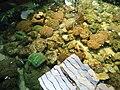 Cá biển Nha Trang trong bể 3.jpg