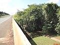 Córrego Rico na SP-333 - Divisa de Municípios Jaboticabal-Taquaritinga - panoramio.jpg
