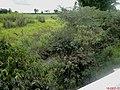 Córrego da Onça, limite dos municípios de Colina e Bebedouro na Rodovia Brigadeiro Faria Lima - SP-326 - panoramio.jpg