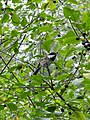 CINLB - 20120909 - baies et oiseau.JPG
