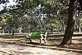 CISA2KTTT17 - Cubbon Park 01.jpg
