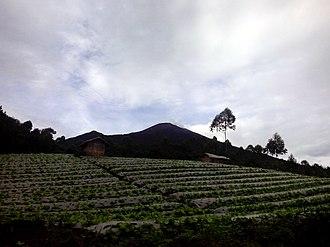 Pemalang Regency - Cabbage farm with the peak of Mount Slamet in the background in Camara hamlet of Batursari village, Pemalang.
