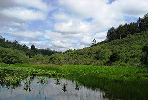 Ellicott Slough National Wildlife Refuge - Calabasas Pond