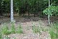 Calamagrostis arundinacea kz01.jpg