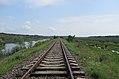 Calea ferată din Rezevația Prutul de Jos.jpg