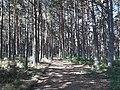 Camino Primitivo, en el bosque de Lago 01.jpg