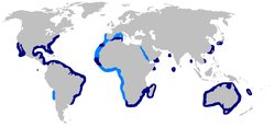 World map with dark blue shading from off New England to southern Brazil, in spots along northwestern African and in the Indian Ocean, around southern Africa, off Japan and China, all around Australia, and around Baja California, and light blue shading from Spain to southern Africa, including the western Mediterranean, and off northern Chila