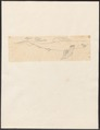 Carcharias glaucus - 1700-1880 - Print - Iconographia Zoologica - Special Collections University of Amsterdam - UBA01 IZ14100017.tif