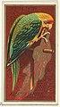 Carolina Parrot, from the Birds of America series (N4) for Allen & Ginter Cigarettes Brands MET DP828756.jpg