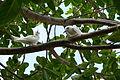 Casal de aves.JPG