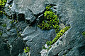 Cascade Falls Park details.jpg