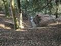 Cawston Wood - geograph.org.uk - 1756389.jpg