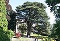 Cedar of Lebanon, Priory Park, Malvern - geograph.org.uk - 1485510.jpg