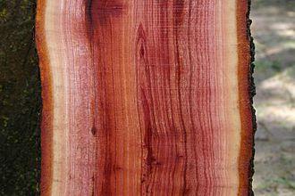 Toona ciliata - Freshly cut Toona ciliata plank