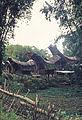 Celebes1977-34 hg.jpg