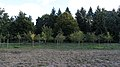 Celler Waldfriedhof Ribbeck's Garten 8681.jpg