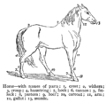 Chambers 1908 Horse.png