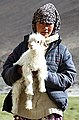 Changpa nomad girl with baby animal in Ladakh, 2013 (cropped).jpg