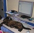 Chat wikipedien.jpg