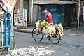 Chicken Transportation - Shyamaprasad Mukherjee Road - Kolkata 2017-09-26 4405.JPG