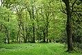 Churchstanton, Ringdown Nature Reserve - geograph.org.uk - 173630.jpg
